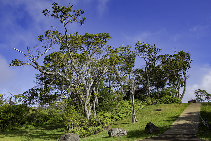 Rapid Ohia Death